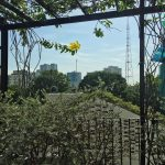 serviced-apartment-in-hcm-three-oaks-2-tybe-a-30
